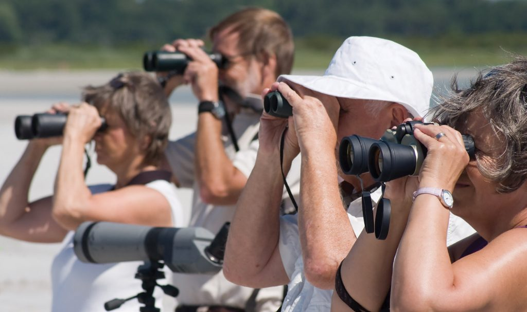 Birders take a closer look during a walk on Wrightsville Beach with Audubon North Carolina. | WBM File Photo