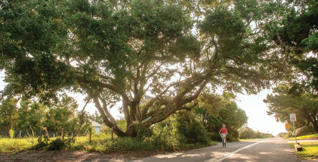 The broad branches of a Southern live oak on Raleigh Street in Wrightsville Beach shade Vickie Ryan-Barr as she rides her bike on a warm morning in September. Photo by Allison Potter.