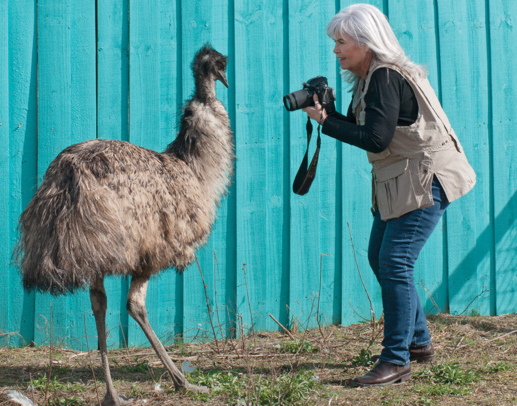 Romeo, an emu at SkyWatch Bird Rescue, was a willing subject for Pat Bradford's camera in March 2019. WBM file photo.