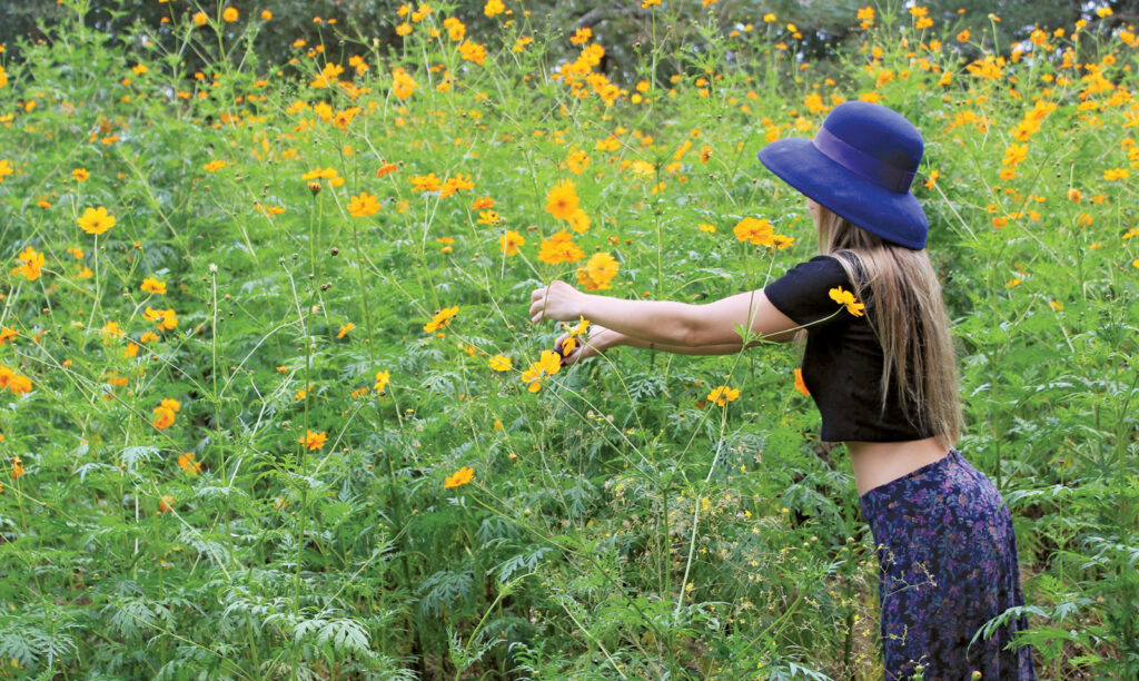 Carly Gee visits a friend's property to pick cosmos destined for her pressed flower art. Photo by Sophia Armstrong